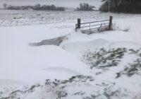 Sneeuw 8 februari